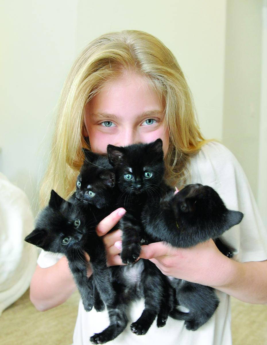 OHL Kittens Cover4